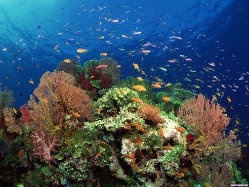 Волшебство красного моря